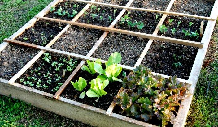 square foot gardening 025