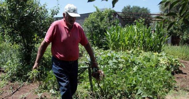 Greek gardener