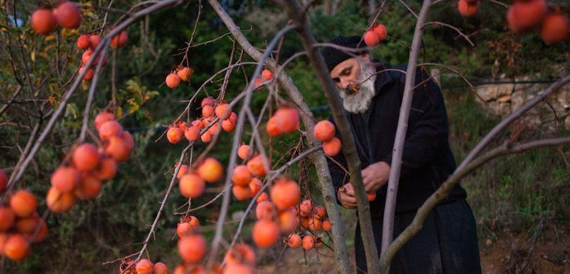 priest, prayer, and fruit