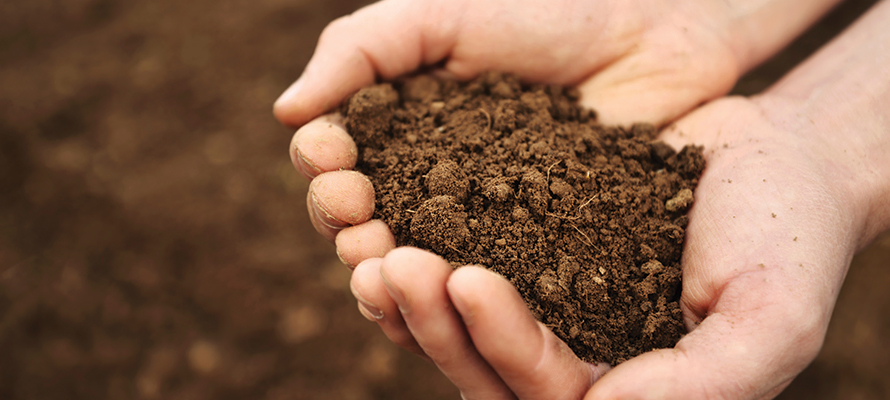 Antidepressant microbes in soil how dirt makes you happy for What is found in soil